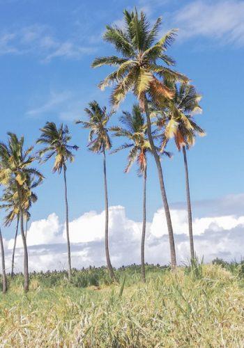 cascades à l'île de la Réunion